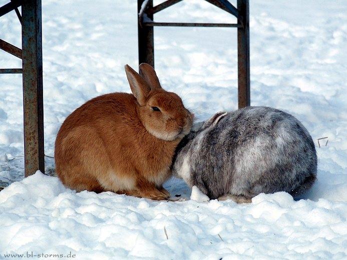 Gartenmobel Auflagen Rattan : Mein Kaninchen im Winter draußen lassen? (Kaninchen draußen lassen )